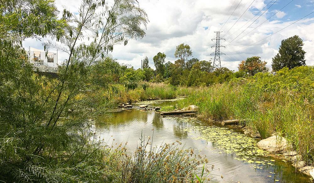 Bundamba Creek Rehabilitation   CUSP